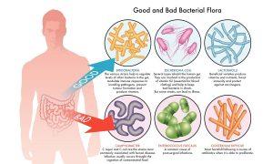 Probiotic align